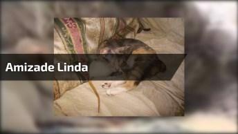 Amizade Linda, Quem Disse Que Gato E Rato São Inimigos, Isso Não Existe Aqui!