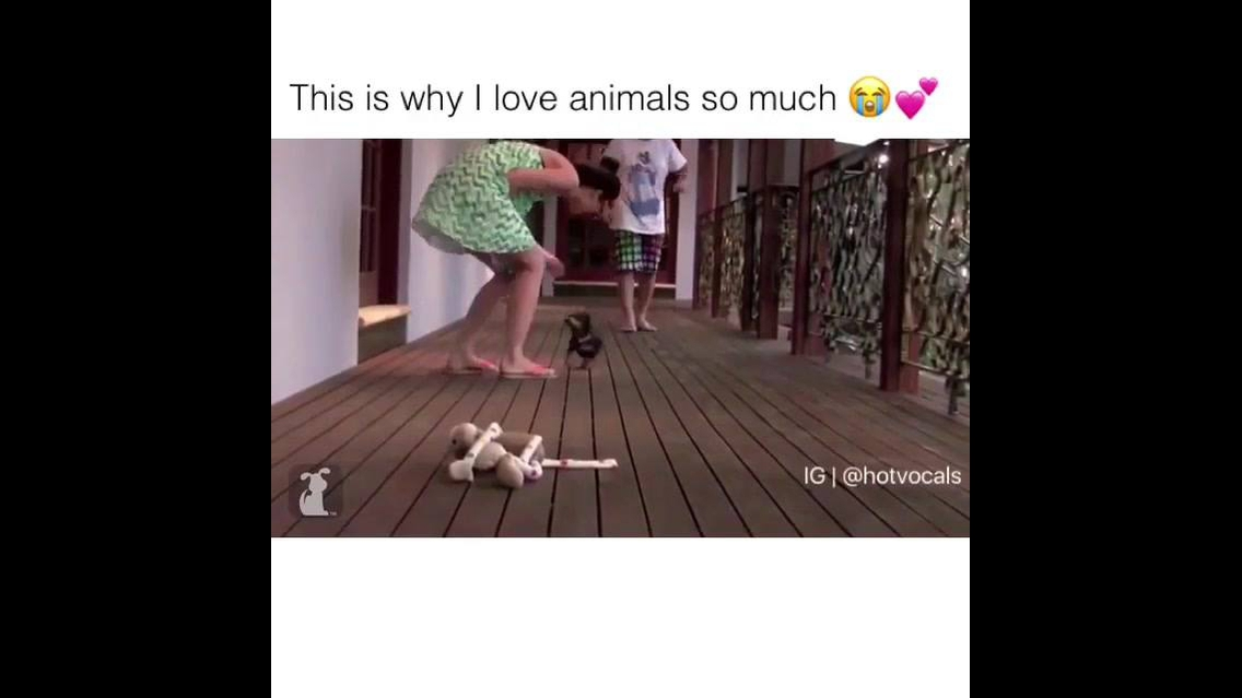 Amor entre os animais e os seres humanos, a relação mais sincera do mundo!