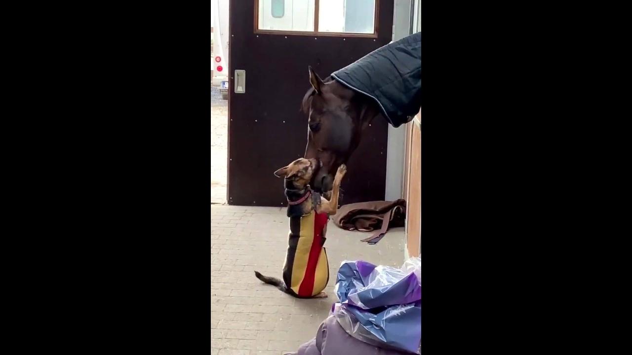 Amor entre um cachorro e um cavalo