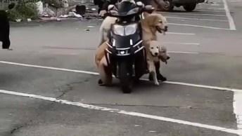 Andando De Moto Com Mais De Seis Cachorros, Incrível, Confira!
