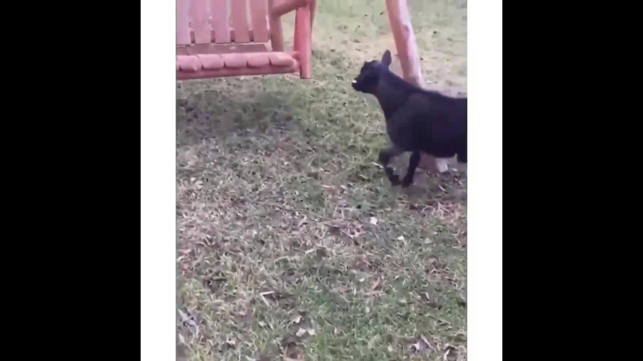 Animais caindo os tombos mais engraçadinhos que você já viu