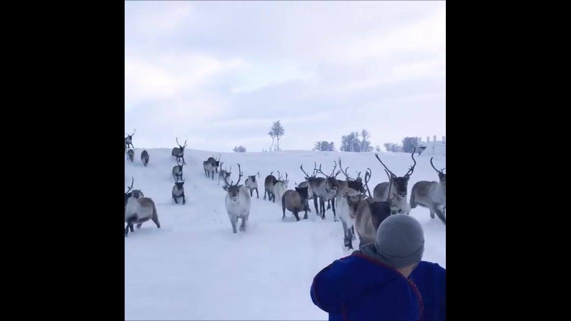 Animais da neve, veja como eles são diferentes e lindos!