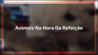 Animais De Diferentes Espécies Na Hora Da Refeição, Confira!