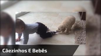 Animais De Estimação E Bebês, Uma Misturinha Pra La De Divertida!