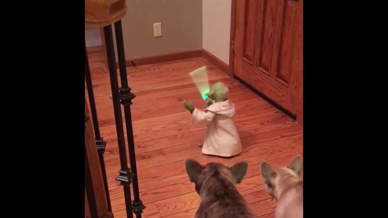 Animais de estimação e brinquedos