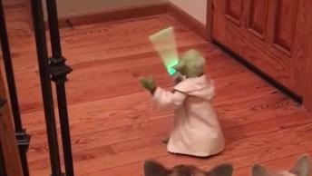 Animais De Estimação E Brinquedos, Veja Como Eles Reagem É Muito Engraçado!