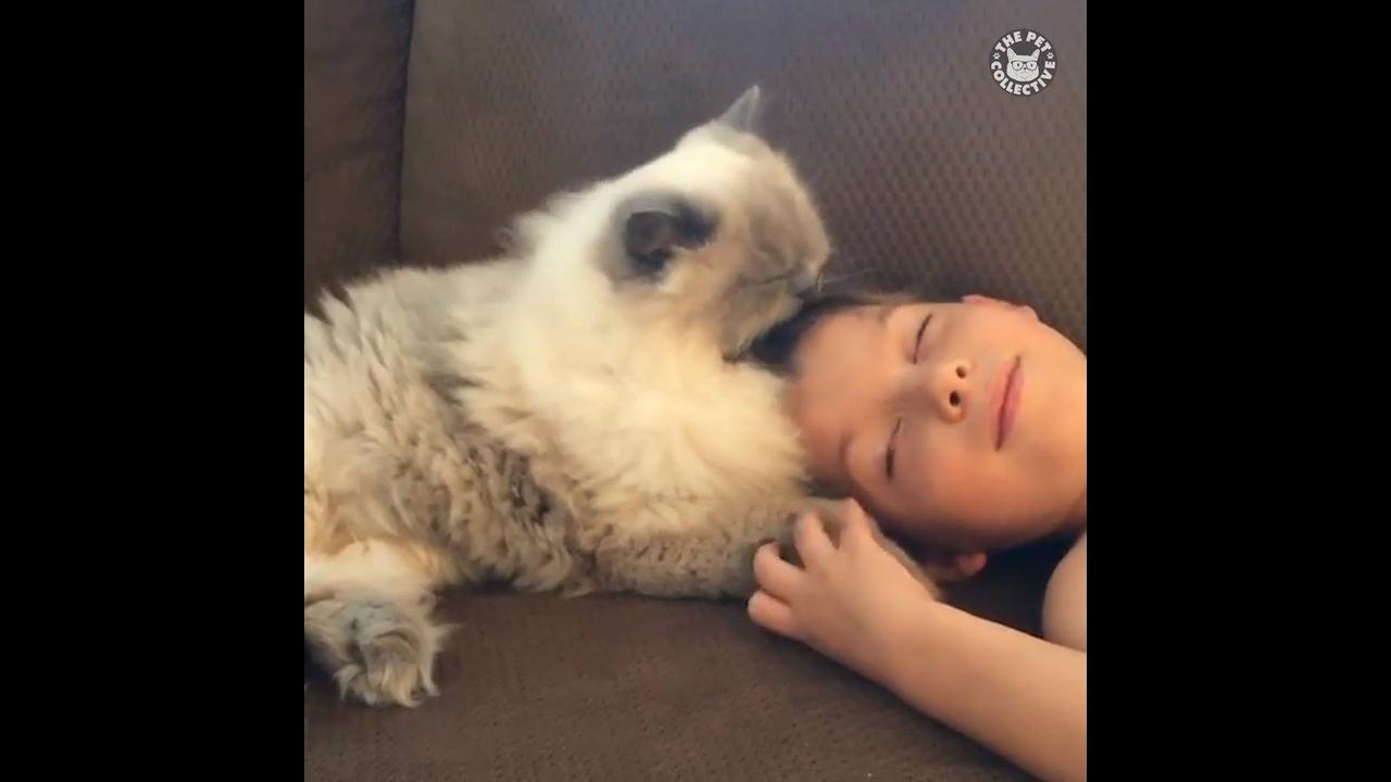 Animais de estimação fazendo carinho em seus donos