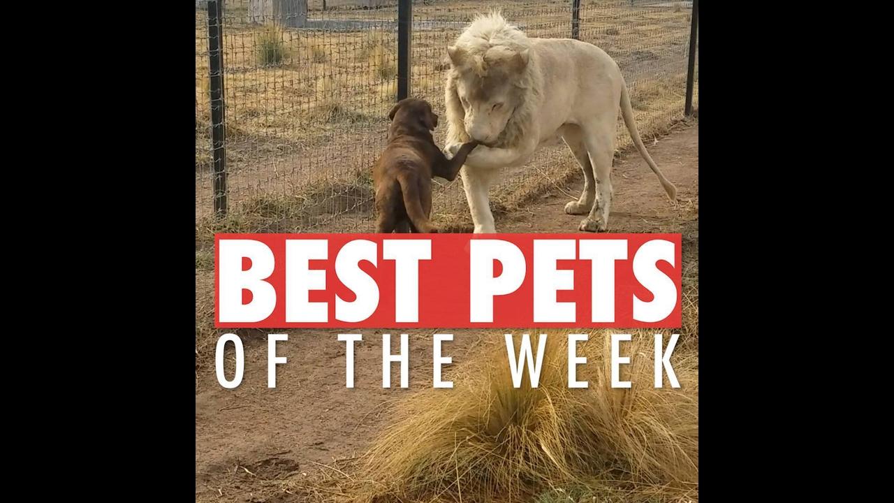 Animais de estimação fazendo coisas engraçadas e surpreendentes!
