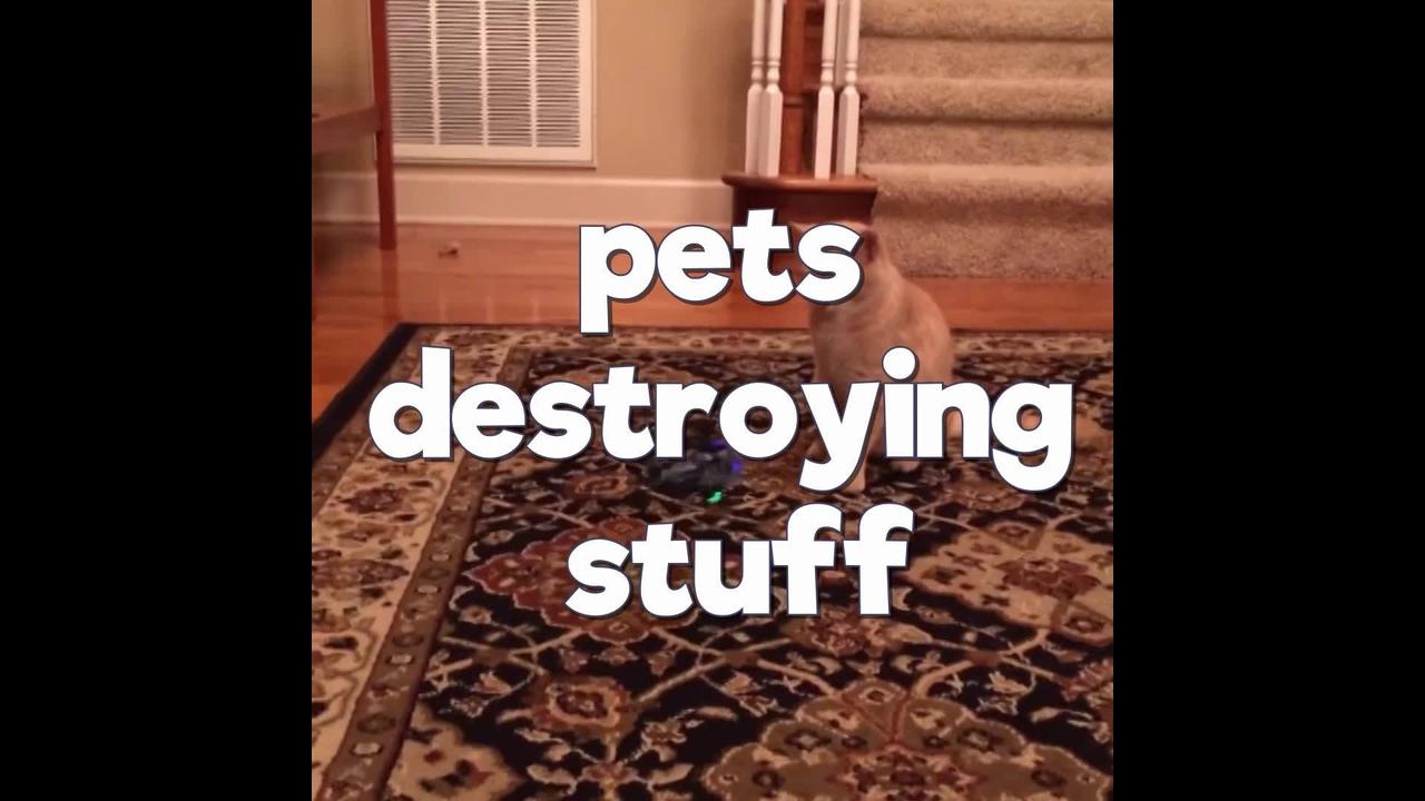 Animais de estimação quebrando tudo por onde passam