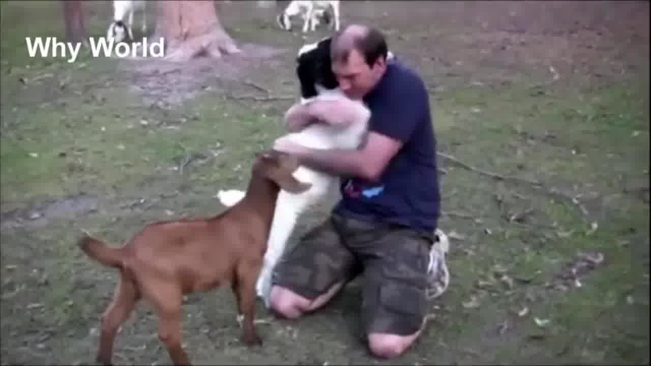 Animais demonstrando amor por humanos
