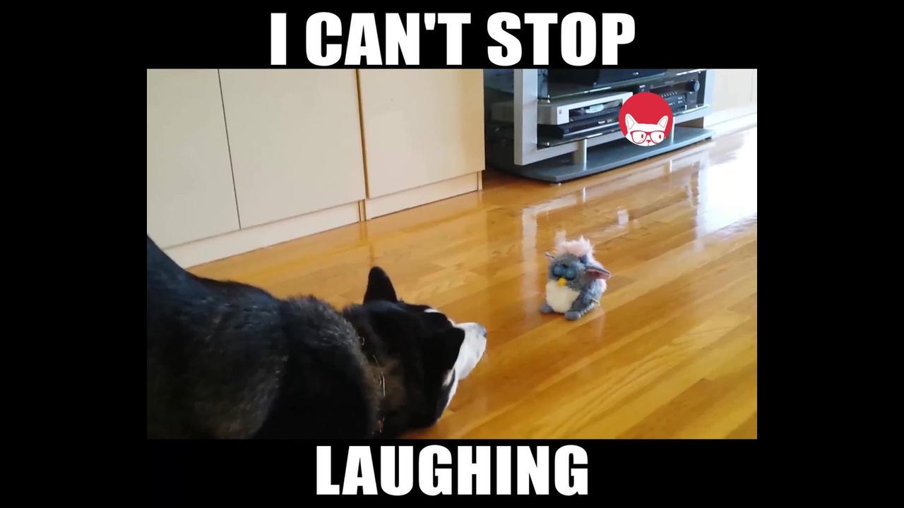 Animais e seu brinquedos, olha só a reação deles