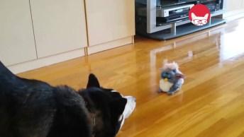 Animais E Seu Brinquedos, Olha Só A Reação Deles, É Muito Engraçado!