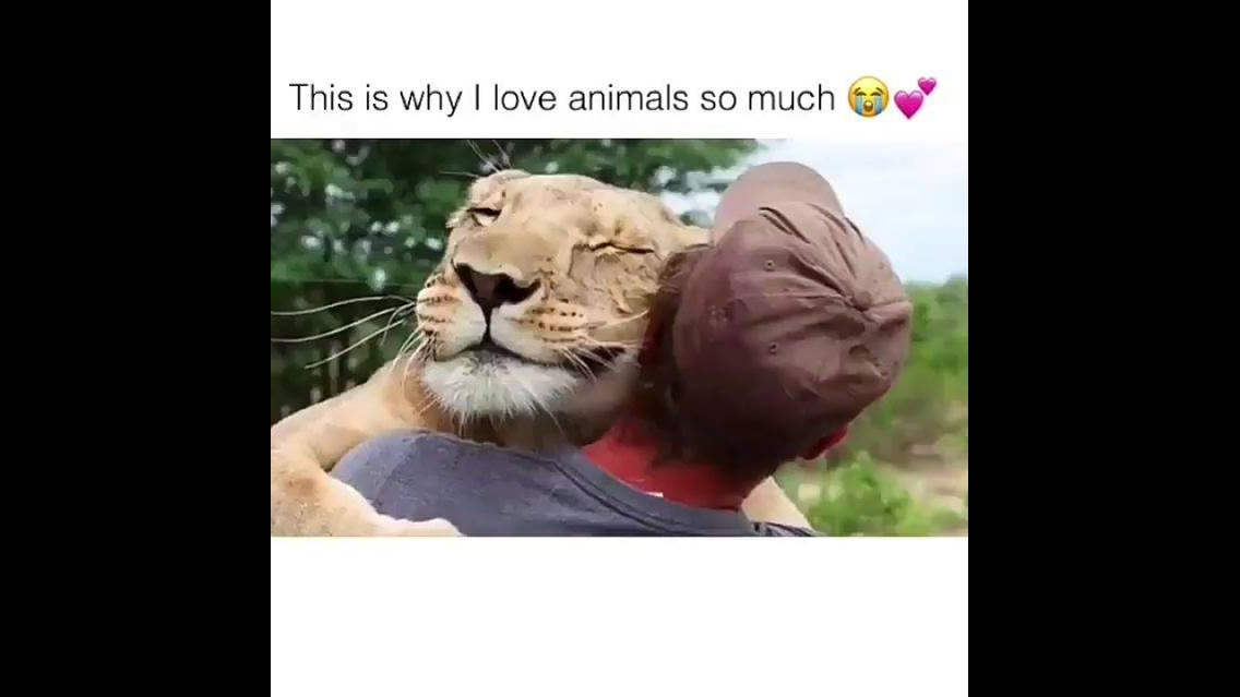 Animais e seu carinho por humanos