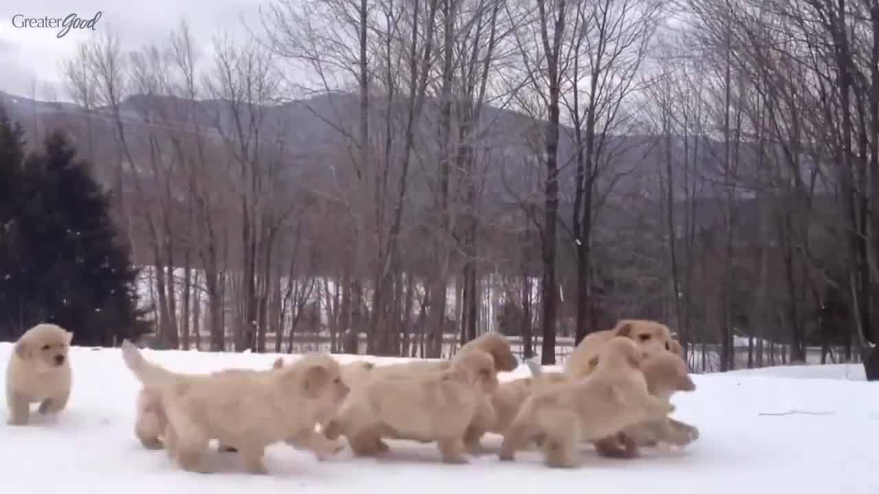 Animais e seus filhotes