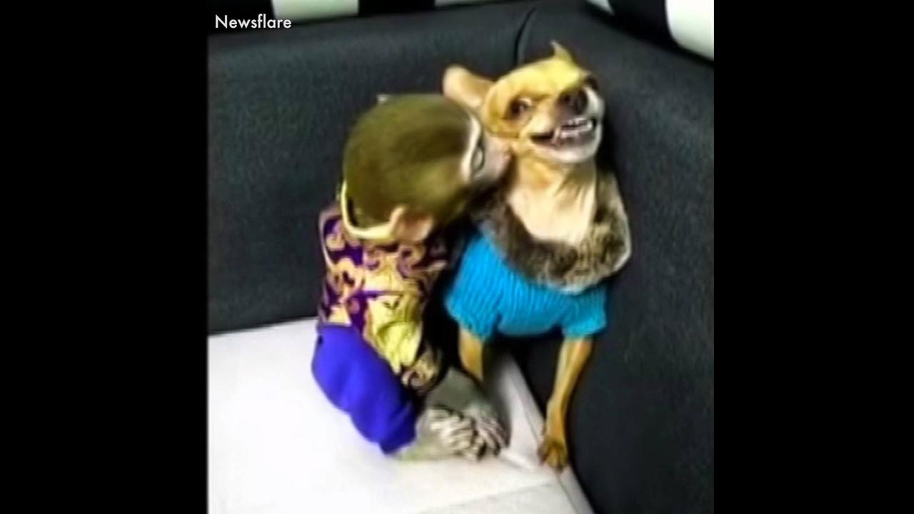 Animais fazendo as coisas mais engraçadas do mundo hahaha
