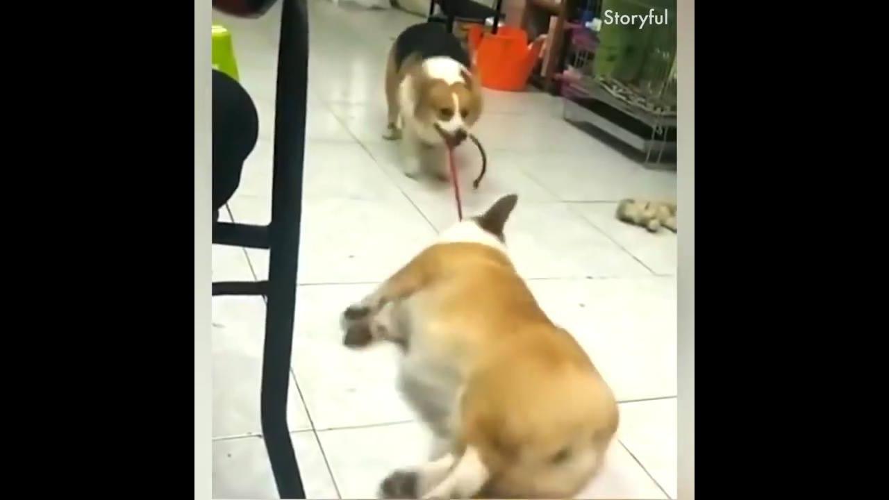 Animais fazendo coisas engraçadas, você vai rir muito com eles!