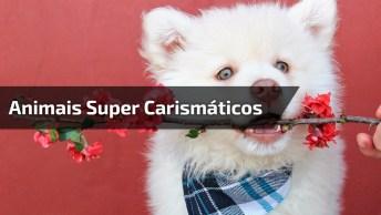 Animais Fofinhos E Super Carismáticos Para Fotos, Confira!