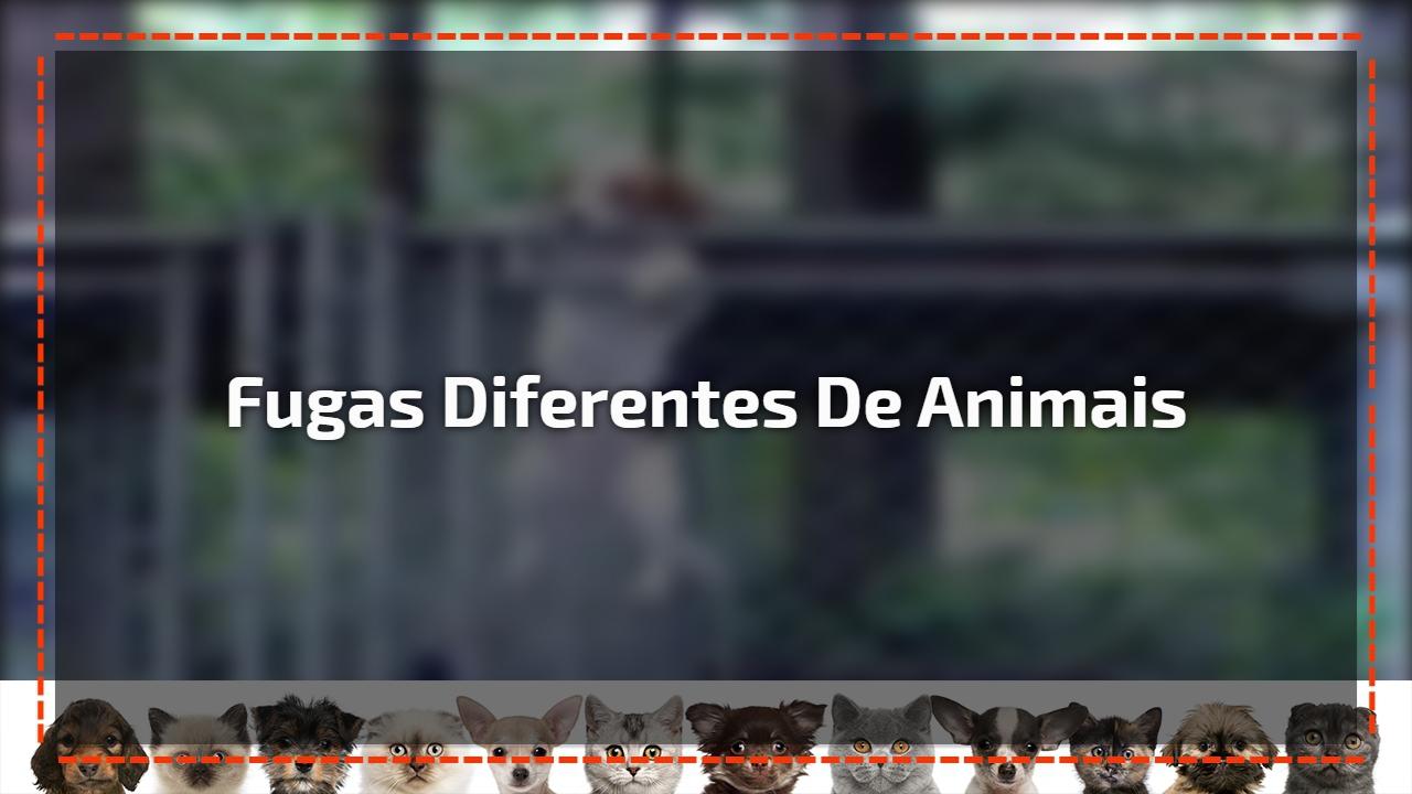 Fugas diferentes de animais