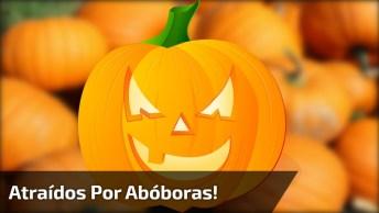 Animais Grandes Comendo As Abóboras De Halloween, Que Susto Hein!