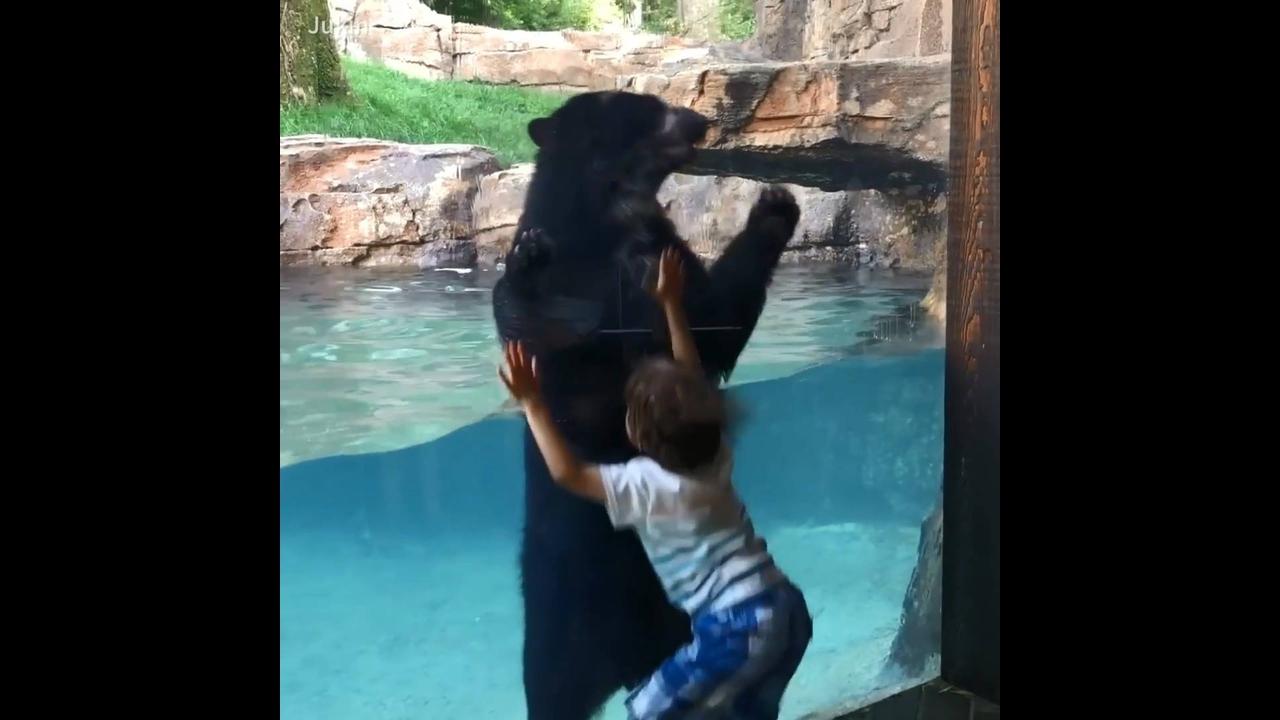 Animais imitando pessoas