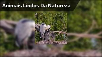 Animais Lindos Da Natureza, Um Vídeo Muito Bonito Para Compartilhar!