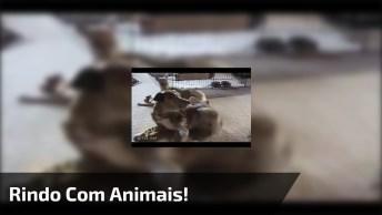 Animais Mostrando Para Que Vieram Na Terra Hahaha, Para Rir E Compartilhar!