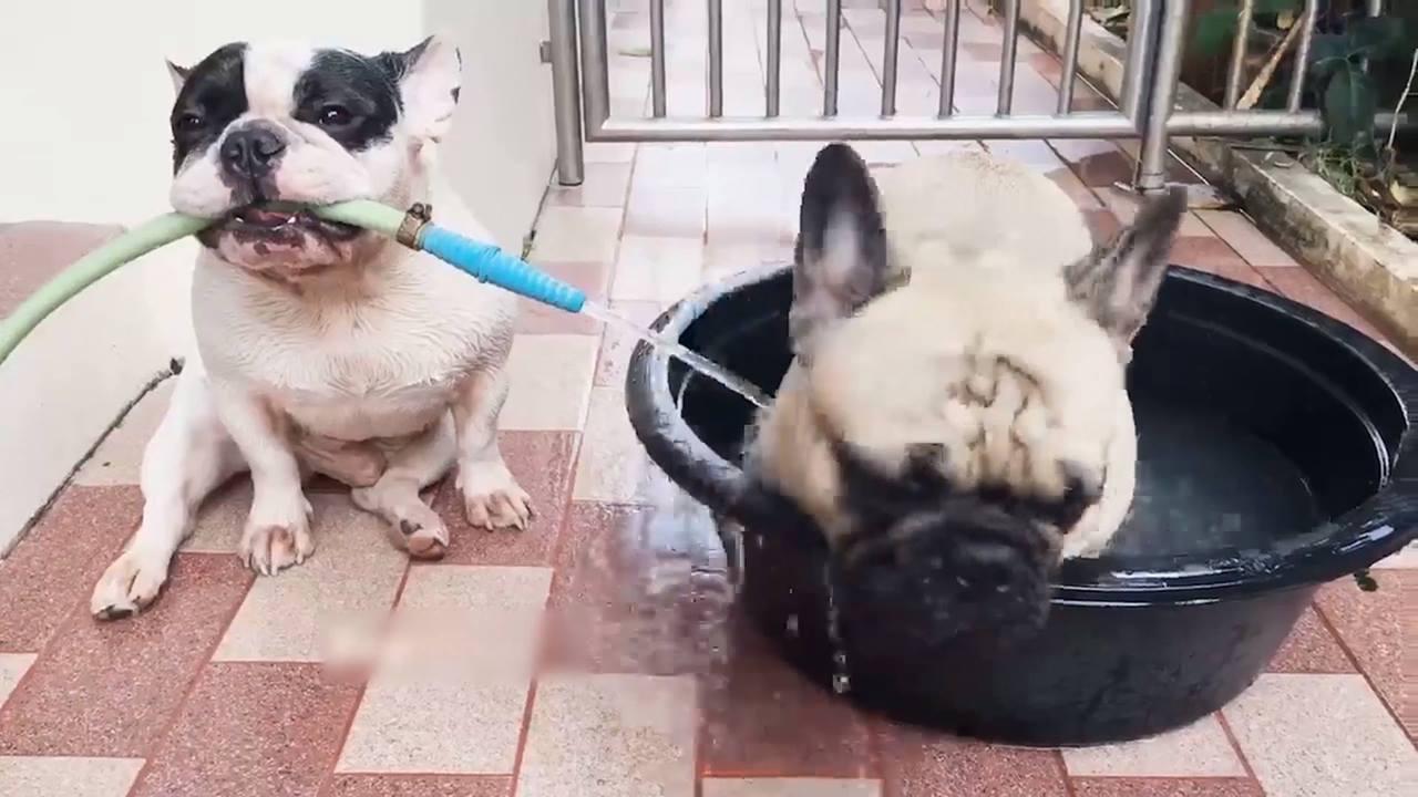 Animais que adoram a hora do banho, que delícia