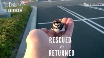 Animais Sendo Resgatados Por Pessoas Conscientes Que Respeitam Os Animais!