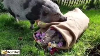 Animais Tem Sentimentos Sim E Esse Vídeo Vai Te Provar, Confira!