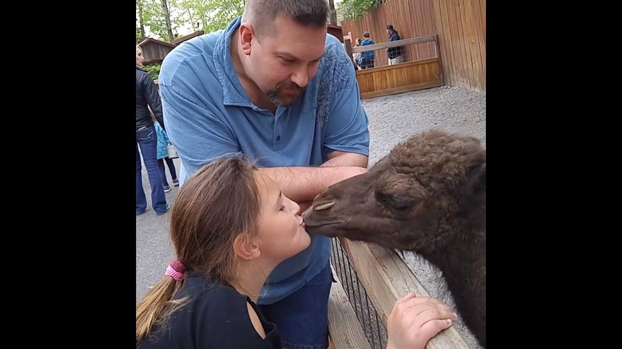 Animais tentando fazer amizades com crianças