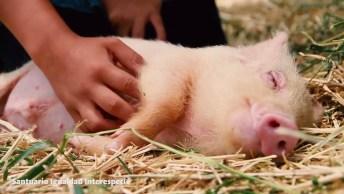 Animais Tirando Uma Soneca, Por Um Mundo Com Mais Igualdade Entre As Especies!