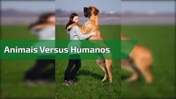 Animais Versus Humanos, Hahaha! Olha Só O Que Engraçado Este Vídeo!