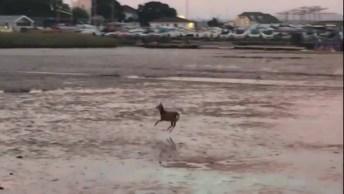 Animal Caminhando Com Pulinhos Sobre Um Lago Congelado, Será Que Vai Romper?