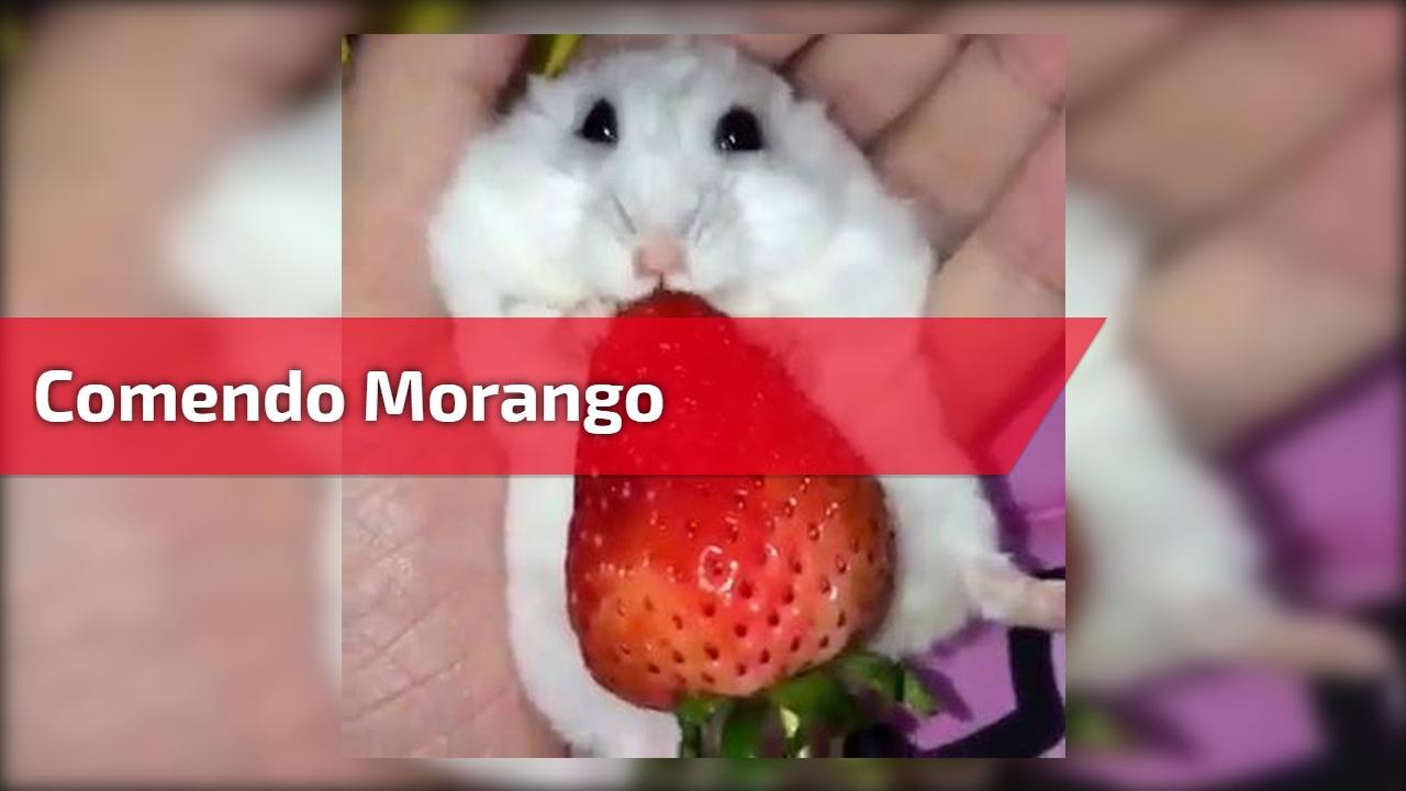 Comendo morango