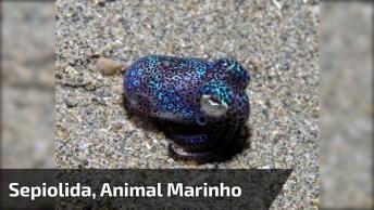 Animal Marinho Diferente E Que Se Chama Sepiolida, Confira!