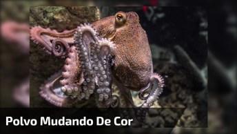 Animal Marinho Que Muda De Cor De Acordo Com O Ambiente!