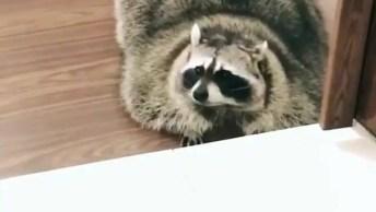 Animal Se Arrastando Pelo Chão, Parece Que Esta Com Preguiça!