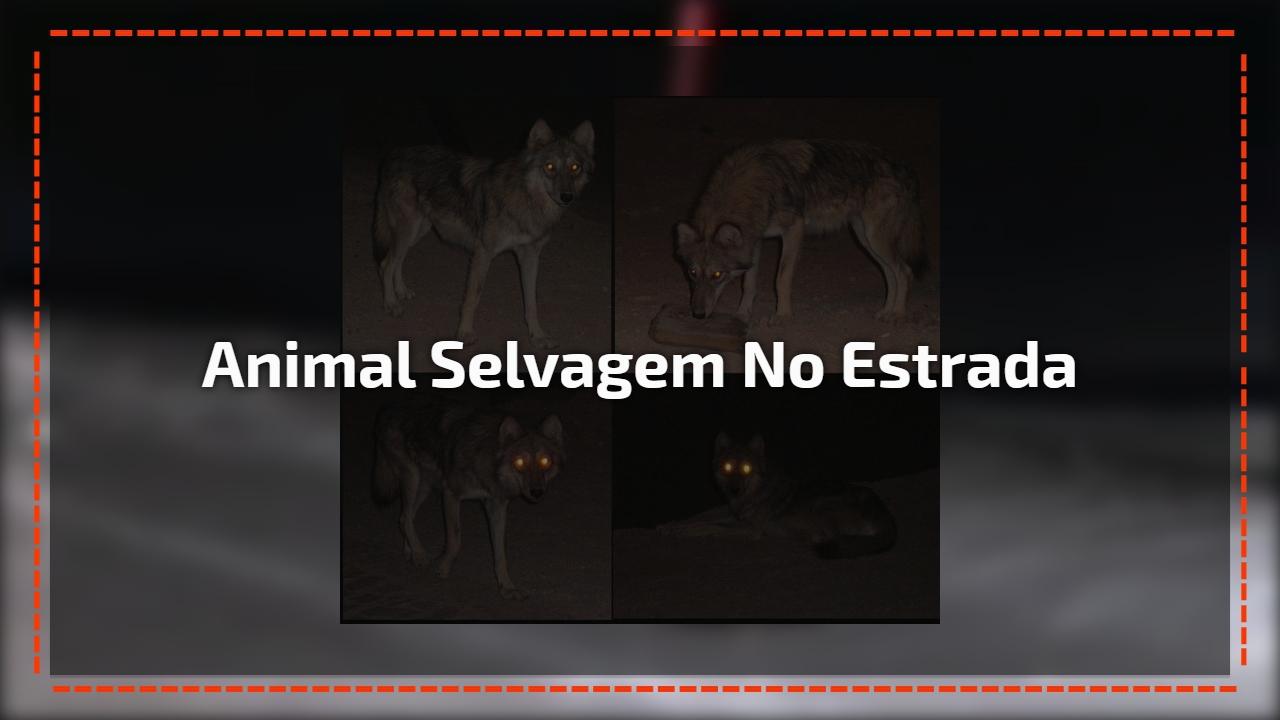 Animal selvagem no estrada