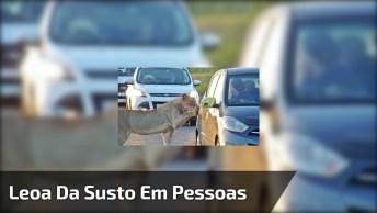 Animal Selvagem Quase Consegue Abrir A Porta Do Carro, Que Susto!