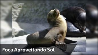 Animal Tomando Banho De Sol Em Cadeira De Humanos, Veja A Folga!