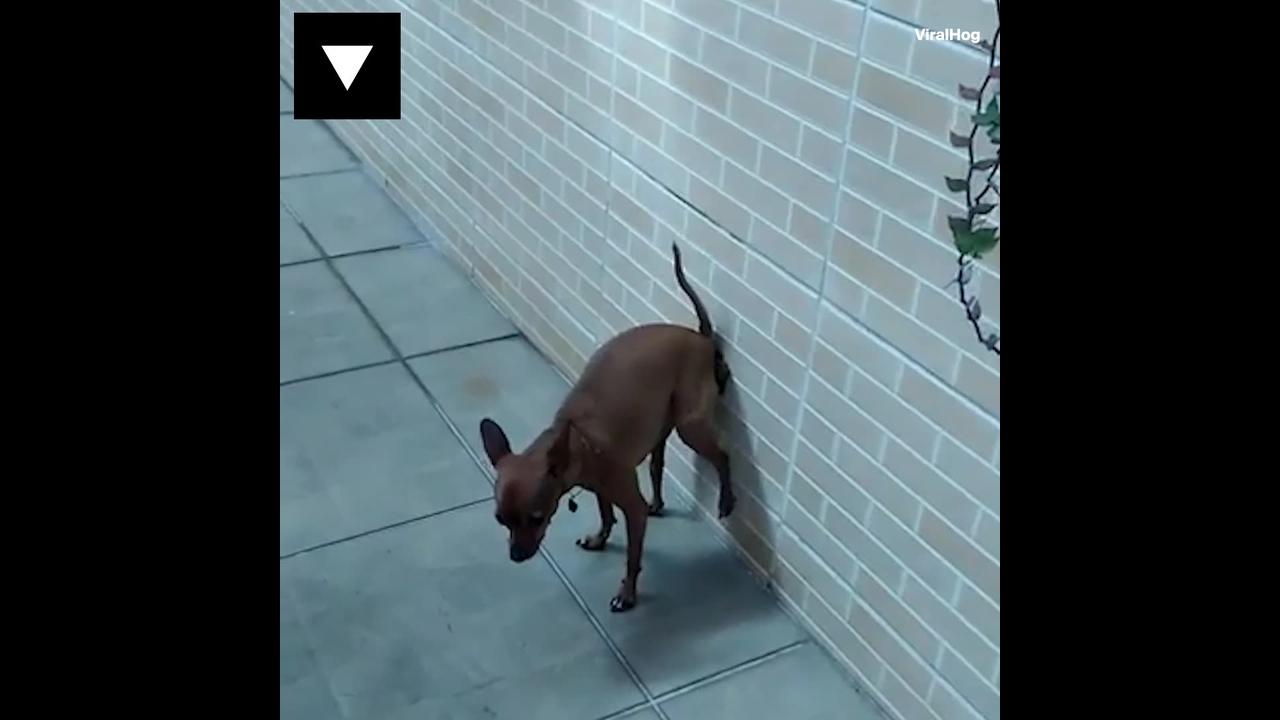 Antes de mexer com os animais, assista a esse video hahaha!