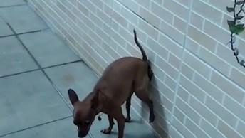 Antes De Mexer Com Os Animais, Assista A Esse Vídeo Hahaha!