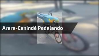 Arara-Canindé Pedalando Em Sua Bicicleta, Que Cena Mais Fofa!