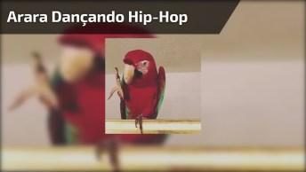 Arara Dançando Hip-Hop, Essa Arara É Da Pesada Hahaha!