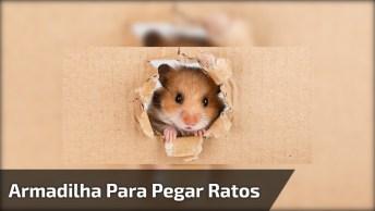 Armadilha Para Pegar Ratos, Veja Como É Fácil De Fazer E Funciona Bem!