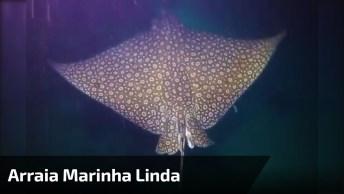 Arraia Marinha Linda Nadando Nas Profundezas Do Mar! A Natureza É Mágica!
