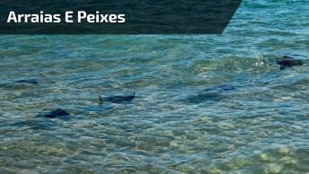 Arraias E Peixes Na Beira Do Mar Sendo Alimentado Por Garoto!