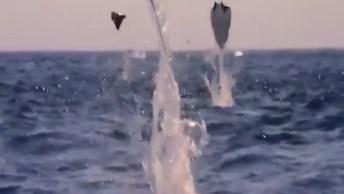 Arraias Voando Pelo Mar, Veja Que Imagens Mais Lindas, Vale A Pena Conferir!