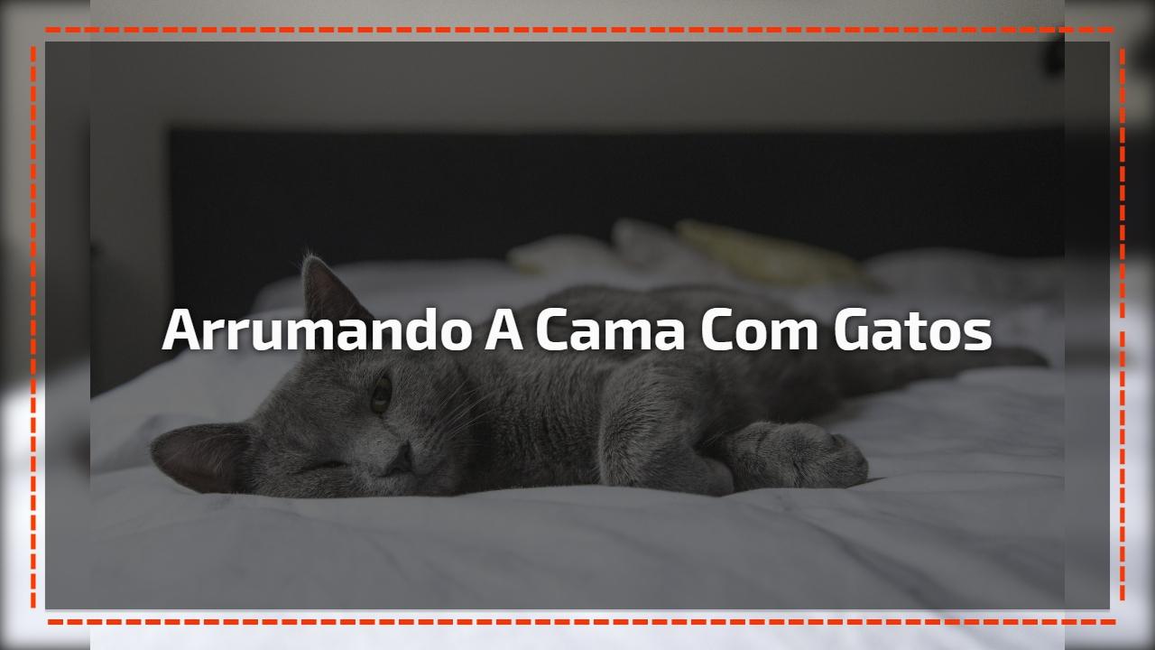 Arrumando a cama com gatos