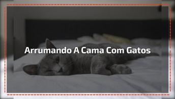 Arrumando A Cama Com Gatos Em Casa, Só Quem Tem, Sabe Que É Assim Mesmo!